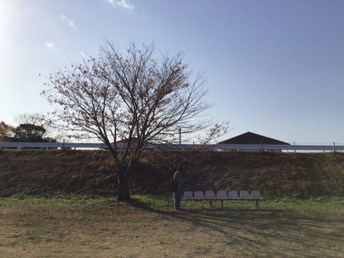 冬枯れた木と、古びたベンチ。