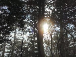 新春登山。神々しい景色がまってました。